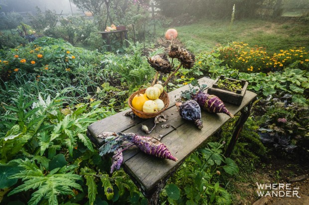 Real Garden and Vegetables On The Hobbit Movie Set