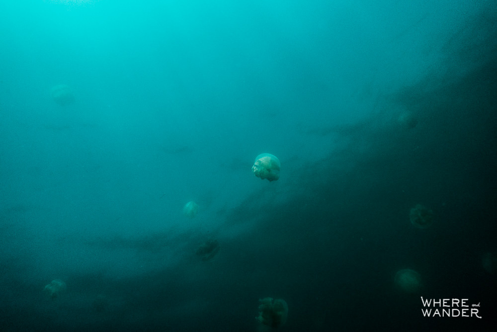 Is It Dangerous To Swim With Jellyfish In Palau
