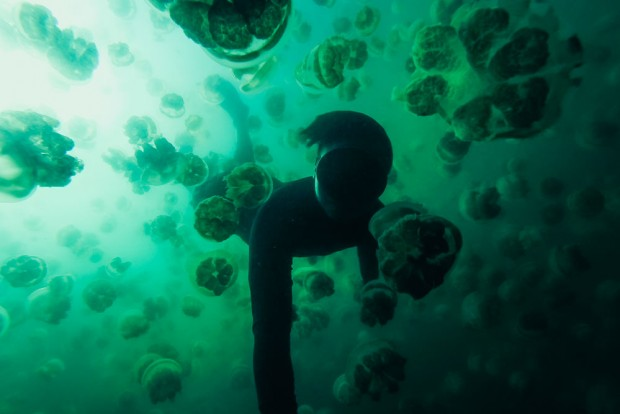 Swimming With A Million Jellyfish In Palau