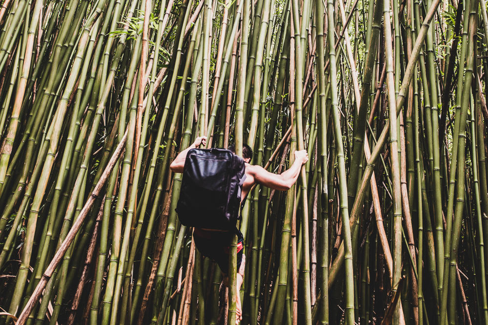 Climber In Bamboo Forest, Road To Hana