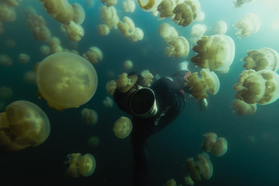 Freediver surrounded by jellyfish in Palau