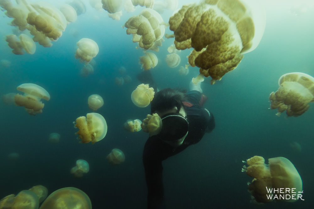 Underwater Photographer Freediving With Jellyfish In Palau