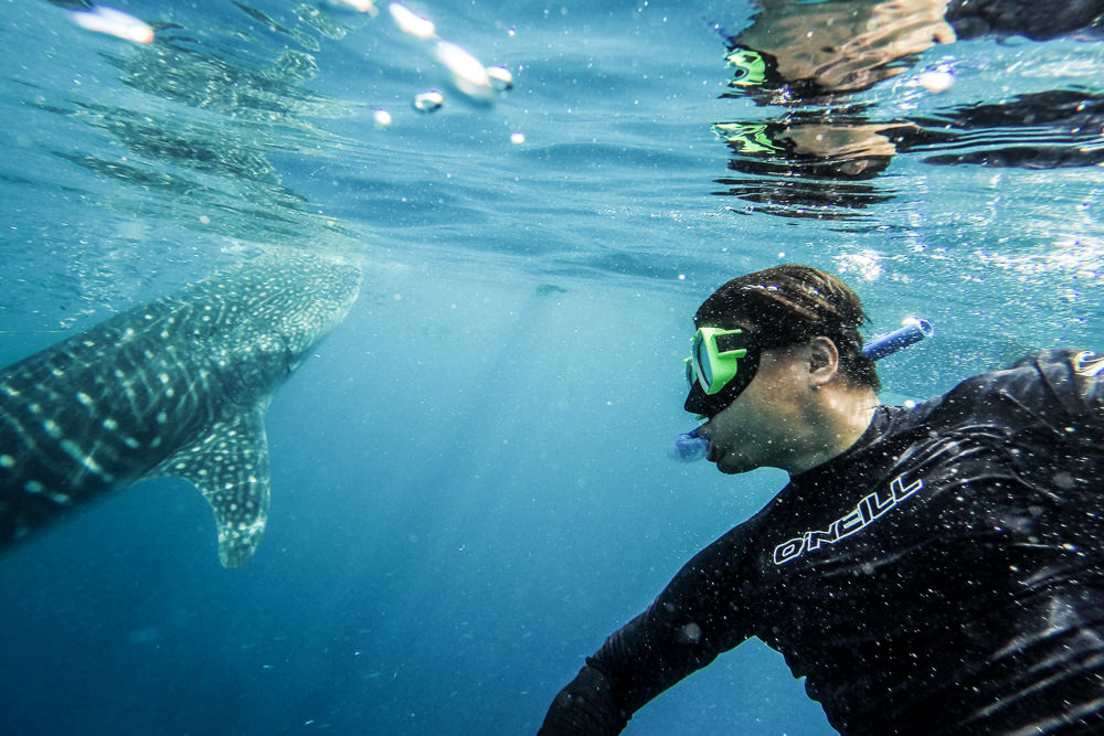 Swimming-With-Whale-Sharks