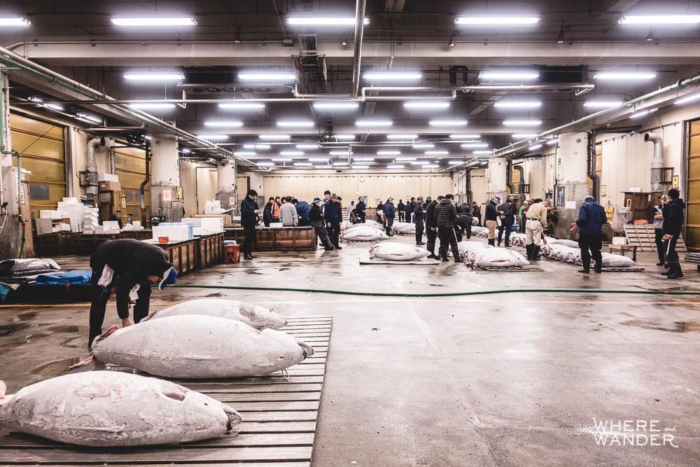 Tsukiji-Tuna-Auction-Tokyo-Etiquette