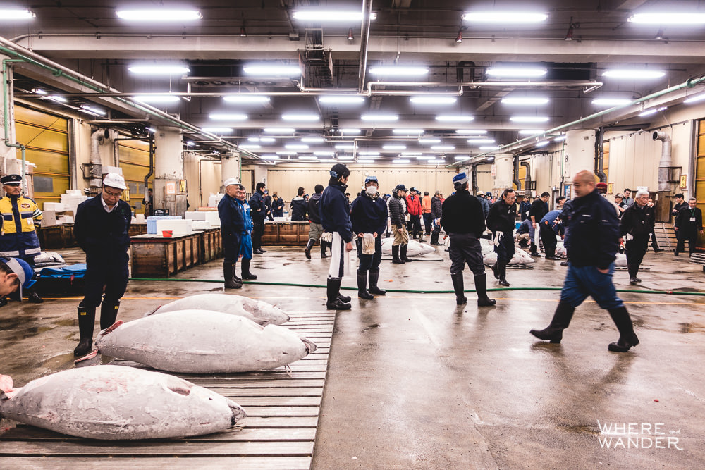 Fish Buyer Waiting For Tuna Auction To Begin At Tsukiji Fish Market