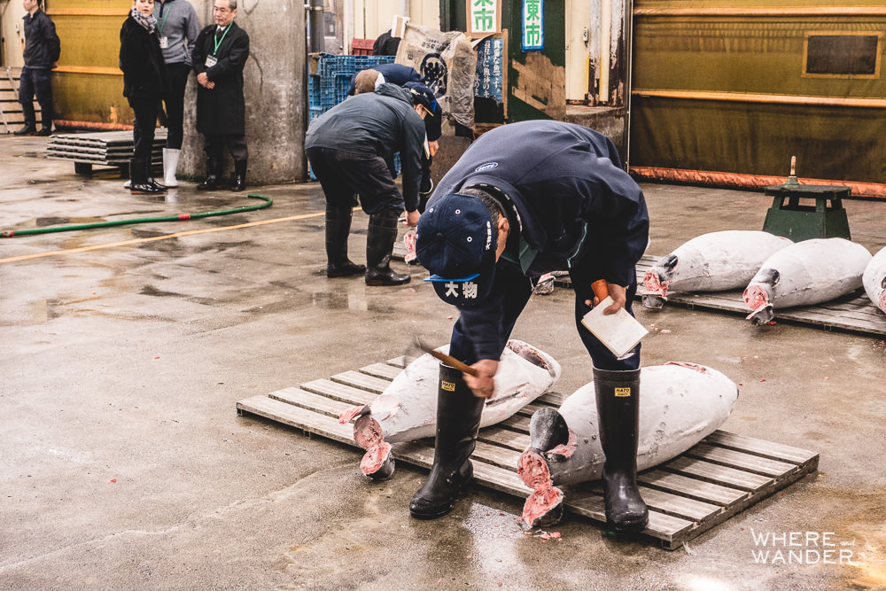Fish Buyer Checking Quality Of Tuna During Tsukiji Fish Market Auction
