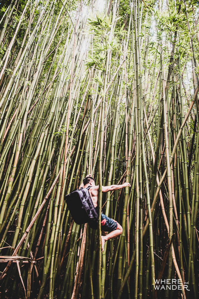 Climbing In The Bamboo Forest
