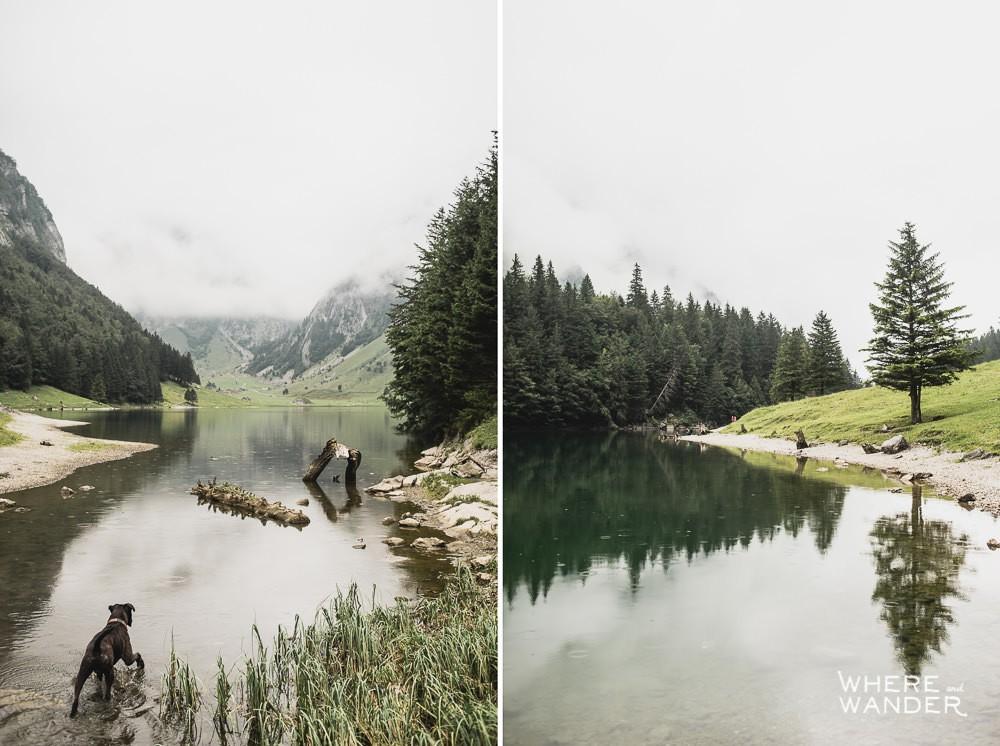 Dog Exploring Lake At Seealpsee