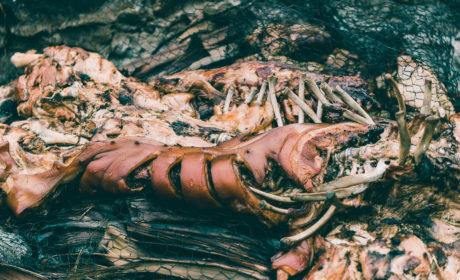 Old Lahiana Luau Whole Roasted Pig Recipe-1