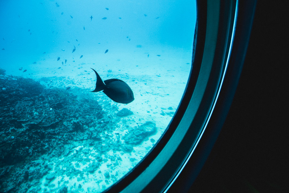 Trigger Fish Outside Submarine Window