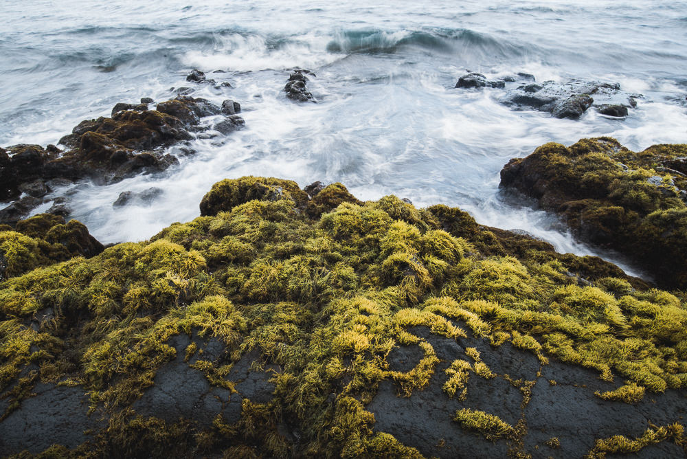 Moss At Black Sands Beach In Hawaii