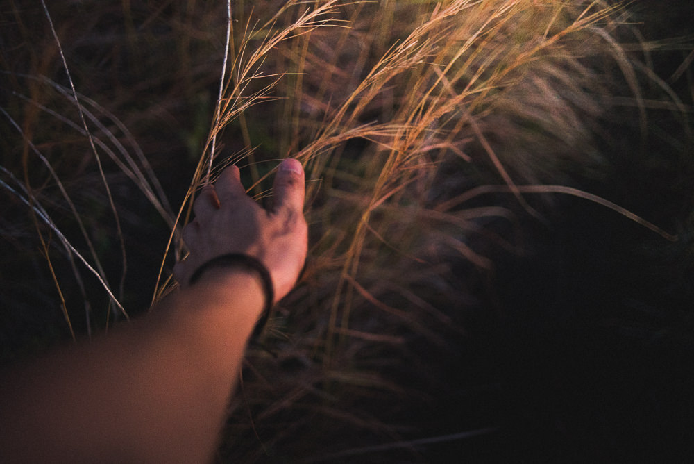 Hand Touching Dry Grass