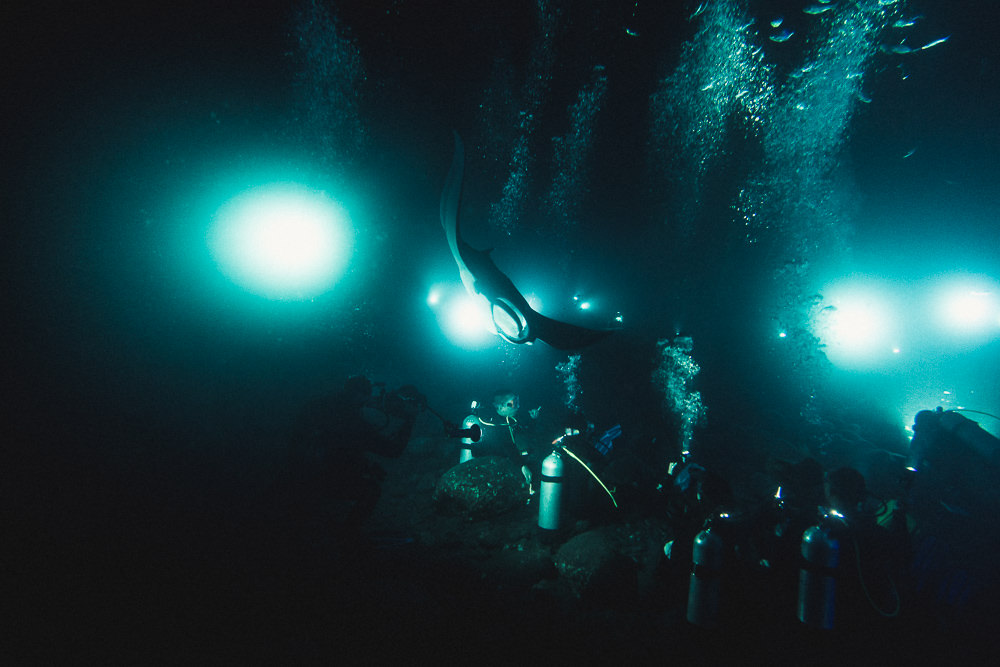 Manta Night Divers