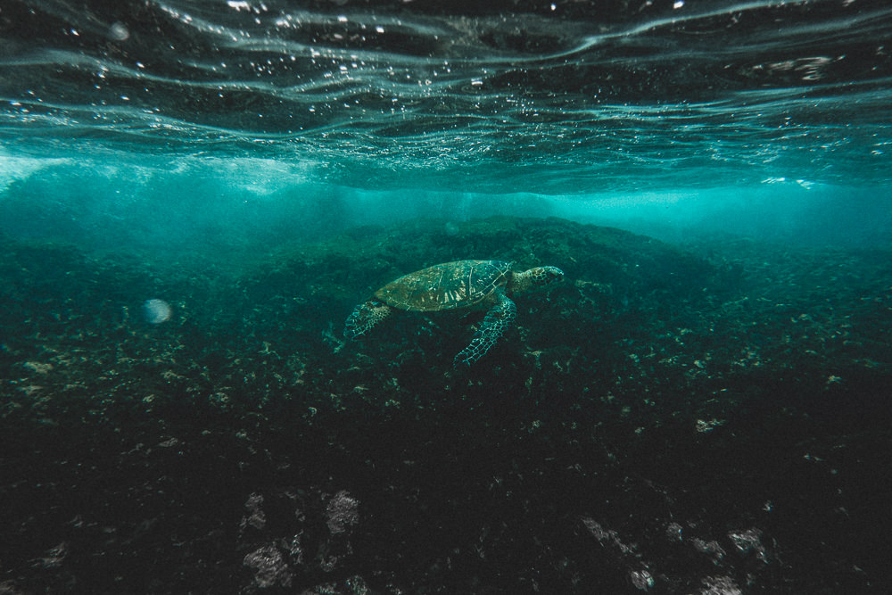 Turtle Underwater At Two Steps