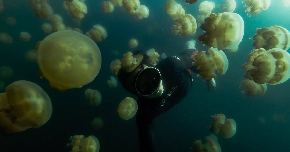 The Thrill Of Swimming With A Million Jellyfish Imagine being surrounded a countless swarm of jellyfish as they slowly close in on from every direction. And knowing that's exactly what you came here for. It's absolutely insane and everyone can experience this.